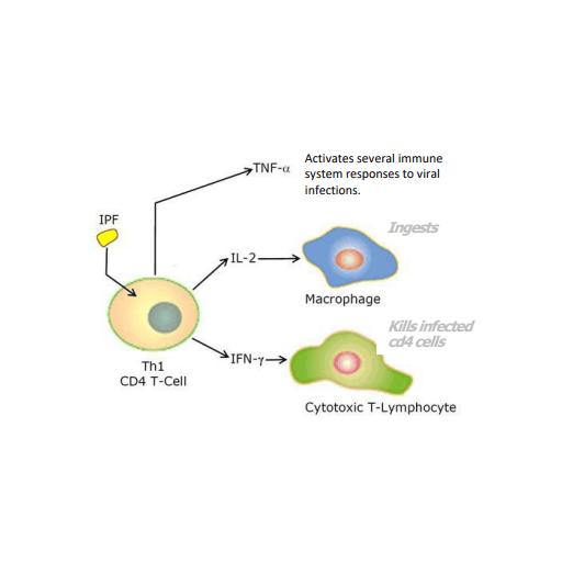 Enzoimmune Active Mode Two